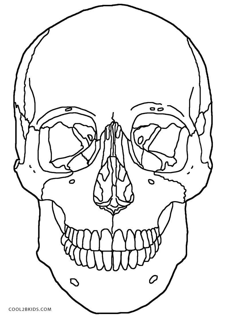 bone diagram of skull