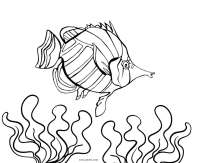 Free Printable Fish Coloring Pages For Kids | Cool2bKids
