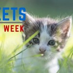 Top Education Tweets of the Week: November 14, 2015