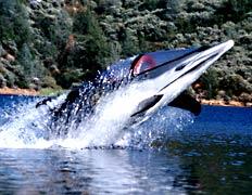 Bionic Dolphin