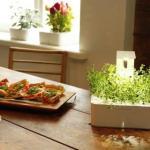 Click & Grow introduces the new Grow Light