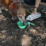 This collapsible Travel Dog Bowl makes sure your pooch stays hydrated