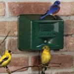 The Ornithologist's Song Bird Attractor might be more effective than a bird house