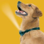Spray your dog up the nose with the Bark Deterring Spray Collar