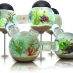 An Aquarium for fish who like to roam