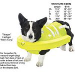 Canine Swim Safe
