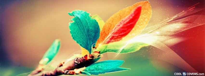 Color Branch Coll Fb Cover Facebook Covers - Cool FB Covers - Use