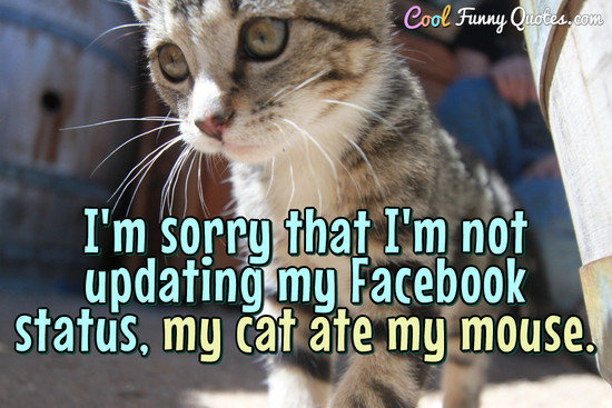 Cute Funny Wallpapers For Lazy Peopke I M Sorry That I M Not Updating My Facebook Status My Cat