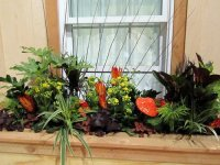 World Is More Beautiful With Plants In Window Boxes