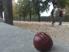 Herbstimmung im Schlosspark Pillnitz