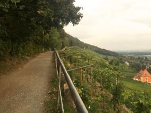 Pillnitzer Wanderweg entlang der Weinberge