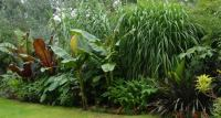 Cool Tropical Plants