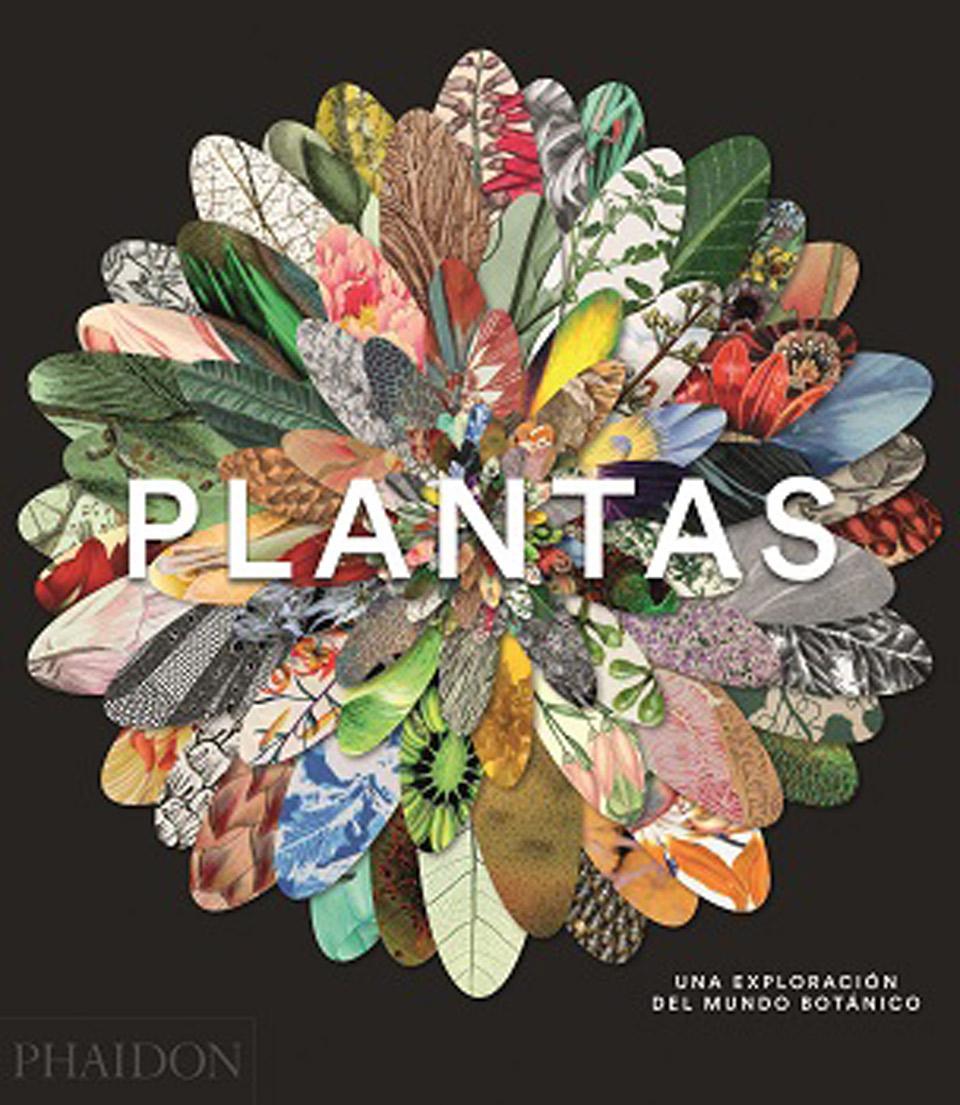 Plantas | Una Exploración del mundo botánico