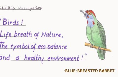 blue-breastedbarbet