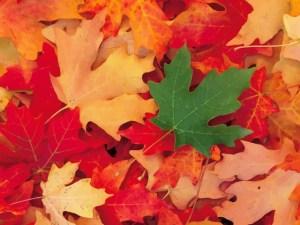 Foliage-Vector