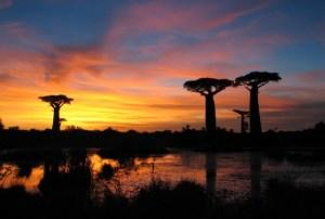 spettacolare-tramonto-sui-giganteschi-baobab