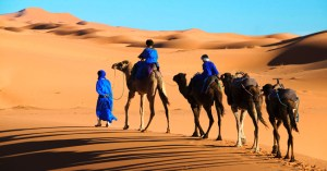 Tuareg man and his children dressed in traditional blue robe with camels in the Erg Chebbi area Sahara desert Morocco