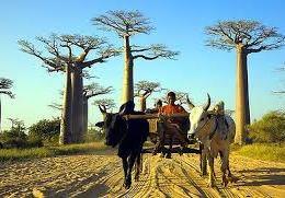 Il banano e il monte degli dei  I misteri del Madagascar