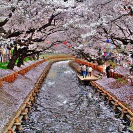 _Kyoto,_Japan