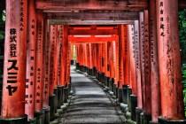 Kyoto, 15 cose da sapere