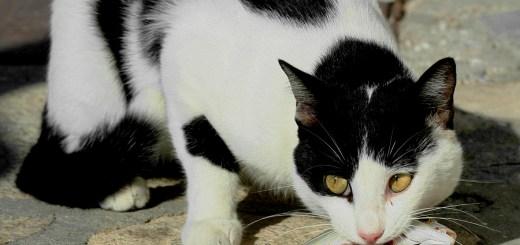 A este gato no le importa mucho el peso de su sardina | Foto de: http://thrumyeye.deviantart.com/