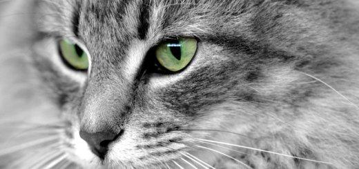 A veces, si miras directamente al gato, puede sentirse amenazado | Foto: nelsonaf.deviantart.com/