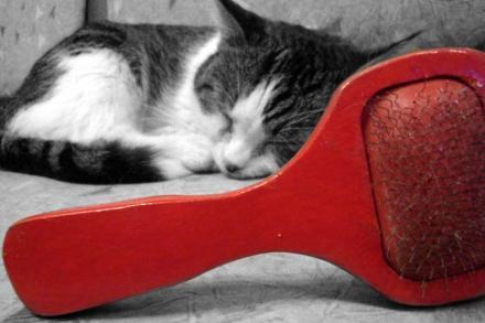 Con el cambio de temperatura, el gato pierde más pelo | Foto: maryjomccormic.deviantart.com
