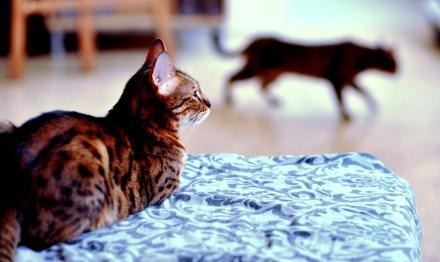 Cómo preparar llegada de nuevo gato | Foto: utilikiltarian.deviantart.com