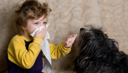 La alergia a los gatos es muy común | Foto: mundoanimalia.com