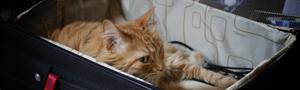 Viajar gatos