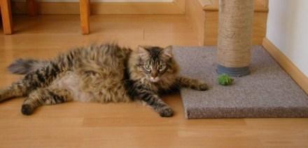 Rascador gatos | Foto: derechoanimal.com