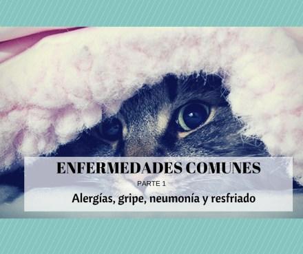 enfermedades gatos alergia gripe neumonia resfriado
