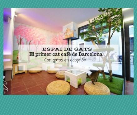 Espai de Gats, cat cafe Barcelona