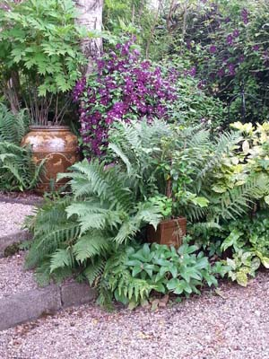 Clematis Etoile Violette and Dryopteris