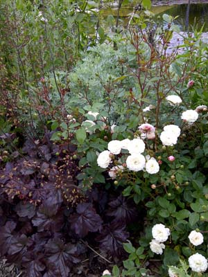Little White Pet, Artemisia and Heuchera Palace Purple
