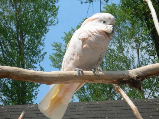 birdland cotswolds
