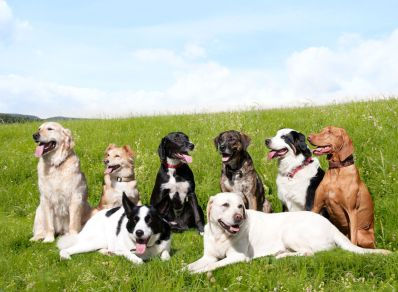 cotswold-show-2017-cotswolds-concierge (12)