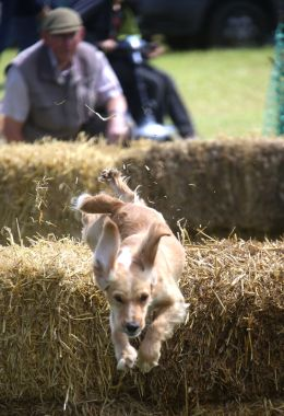 cotswold-show-2017-cotswolds-concierge (3)