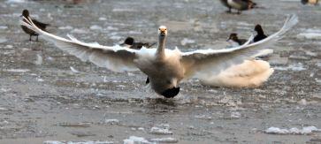 slimbridge-wetland-centre-cotswolds-concierge (5)