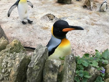 birdland-bourton-on-the-water-cotswolds-concierge (4)