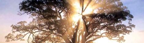 Leave Scarcity Behind –  Live Life Abundantly!