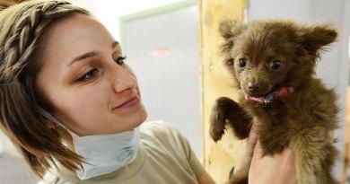 Was lohnt sich wirklich für Hunde: OP- oder Krankenversicherung?