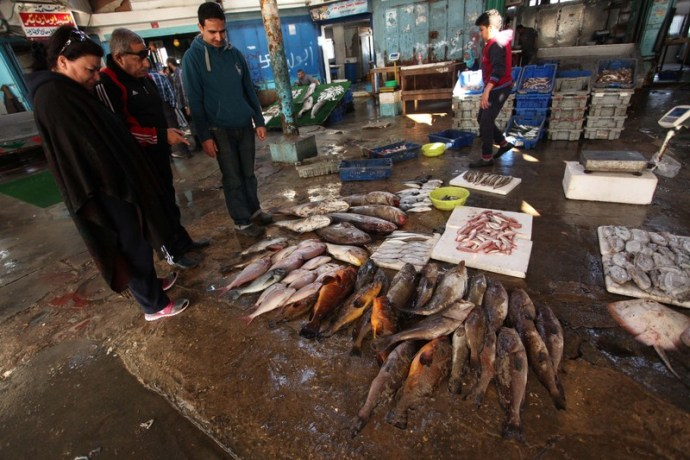 Palestinian fishermen display their catch in Gaza's seaport in April 2016. (Ashraf Amra / APA images)
