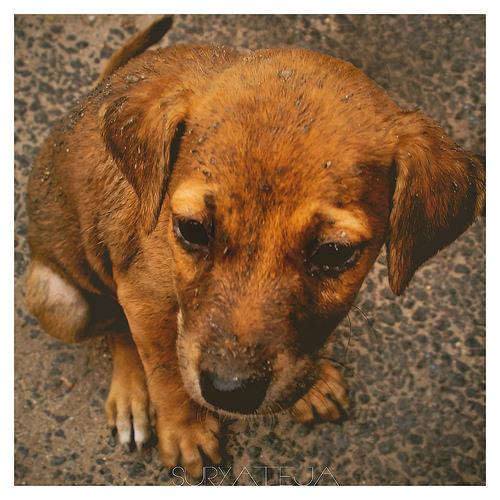 India Street dog photo