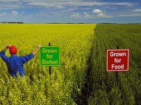 24 Countries Must Share Their Surplus Farmland With 2 Billion Others