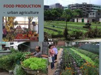 Practicing Commons In Community Gardens: Urban Gardening As A Corrective For Homo Economicus