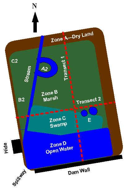 wetland survey details and interactive diagram