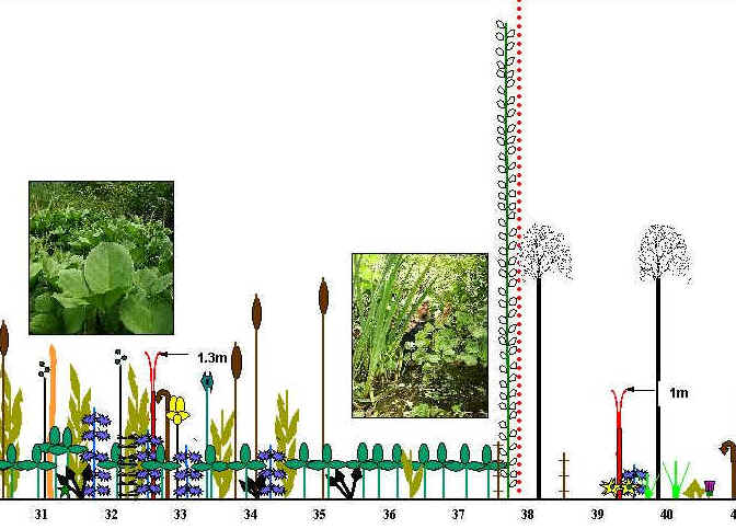 Continuous E/W line transect diagram through the wetland