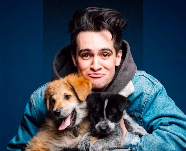 Fall Wallpaper With Dogs Must Watch Must Watch Brendon Urie Playing With Puppies