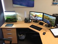 Feng Shui Tips for office | The Royale